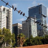 Тель Авив и голуби Мира! :: Борис Херсонский