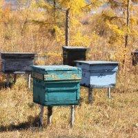 Пчелиная ферма. :: Ирина Атаманская