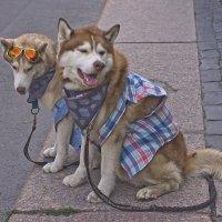 Что собаки ездовые бывают слышал, но чтобы байкеры - в первый раз! :: Senior Веселков Петр