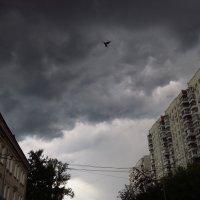 Буревестник :: Андрей Лукьянов