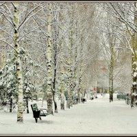 Зимняя аллея :: Leonid Tabakov
