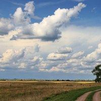 Последний месяц летних впечатлений... :: Лесо-Вед (Баранов)