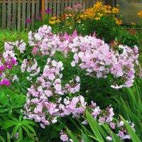 В саду :: sm-lydmila Смородинская