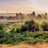 Утром, туман в июле :: Юрий Стародубцев