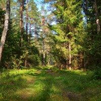 День в летнем лесу :: Алексей (GraAl)