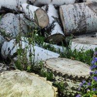 летние заботы деревни :: павел бритшев