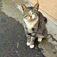 Кот, просто кот - уличный! :: Михаил Столяров