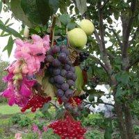 и на яблоне может........... :: Владимир