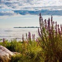 Финский залив (2) :: Виталий
