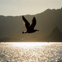 Чайка :: andrey
