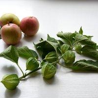 Физалис и яблоки :: Лидия Суюрова