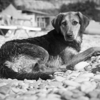 Собакин :: Александр Долгов