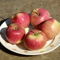 Созрели яблоки в саду у .... :: ofinogen