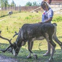 Трогательный зоопарк Оленей. Руза. :: Сергей Ключарёв