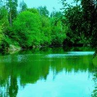 Лесное озерко :: Raduzka (Надежда Веркина)