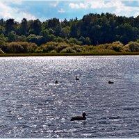 Любуясь озером.. :: Vladimir Semenchukov
