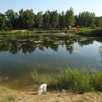 Царила в парке лета красота :: Марина Щуцких