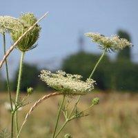 Степные травы :: Татьяна Смоляниченко