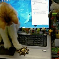 В игровой комнате кота Санни Кая :: Кай-8 (Ярослав) Забелин