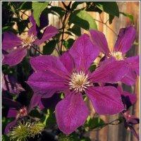 Мелодии цветущего сада. Август. :: muh5257