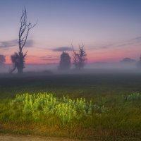 Рассвет на лугу :: Сергей Корнев