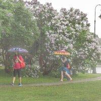Проливной дождь :: Александр Орлов