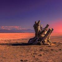 Salt Lake :: Iosif Magomedov
