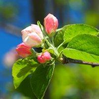 Нежность весны :: Swetlana V