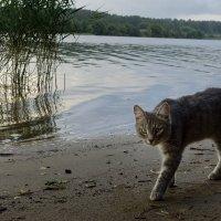 Кошка на берегу :: korgen