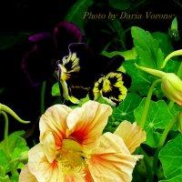 Светлая и тёмные :: Daria Vorons