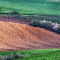 Весна в Южной Моравии :: Андрей Лукашенко