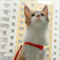 Привет от стройного Кота с прозрачными ушами... :: Кай-8 (Ярослав) Забелин