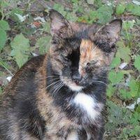 кошка. :: Зинаида