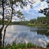 Псковская обл. озеро Жукова. :: Владимир Филимонов