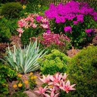 цветы :: Валерий Гудков
