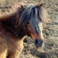 маленький пони :: Юлия Ошуркова
