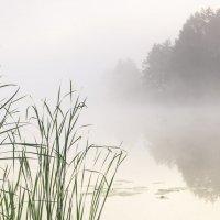 В густом тумане :: Сергей Корнев