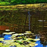 Кусочек  плавной реки... :: Vladimir Semenchukov