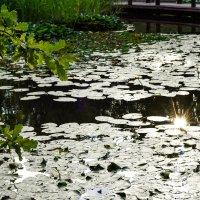 Воронцовский пруд :: Максим