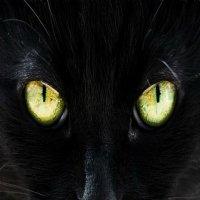 ...эти глаза напротив. :: irina Schwarzer