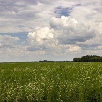 облака над полем :: оксана