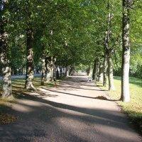 Аллея Александровского парка :: Наталья Герасимова