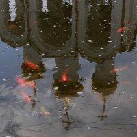 """""""..смилуйся Государыня рыбка совсем старуха сдурела..""""))) :: tipchik"""