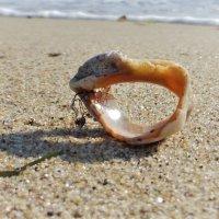 Морская находка :: Swetlana V