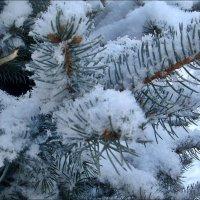 Летом о зиме... :: Нина Корешкова