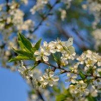 Весна :: Anna Koldings