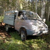 Поездка в лес. :: Павел Михалев