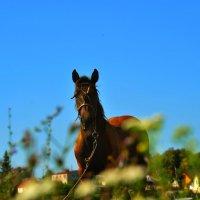 Выйду в поле я с конём... :: Леонид Абросимов