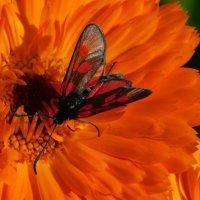 Сияющая красота :: Анастасия Рысь