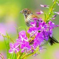 Луговые цветы и птицы :: Влад